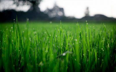 7 consejos para un buen mantenimiento de jardines